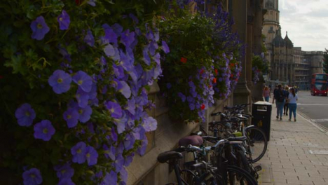 Close-Up-of-Window-Flowers-On-Down-St-Aldates-In-Oxford-England-