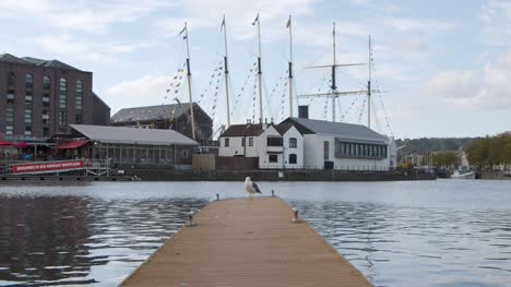 Wide-Shot-of-Seagull-Standing-On-Pontoon-In-Bristol-Marina-In-Bristol-England