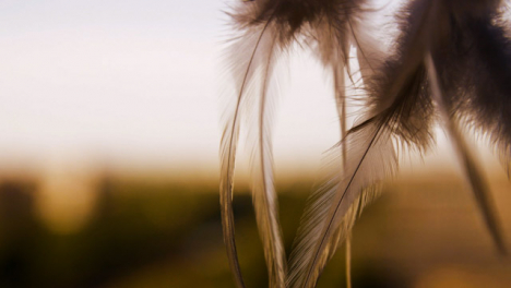Extreme-Close-Up-Shot-of-Dreamcatcher-Feather-Swaying-In-the-Wind