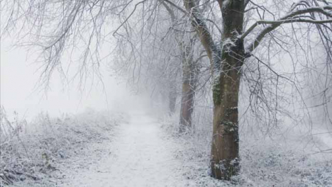 Tracking-Shot-Along-Snow-Covered-Path-In-Snowy-Woodland-