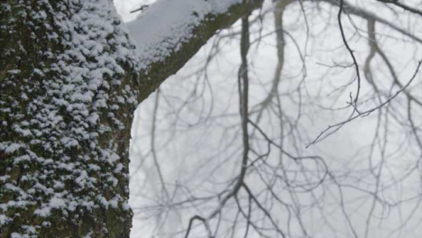 Extreme-Close-Up-Shot-of-Snow-Covered-Tree-In-Woodland