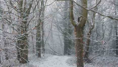 Tracking-Along-a-Snow-Covered-Path-In-Snowy-Woodland-Area