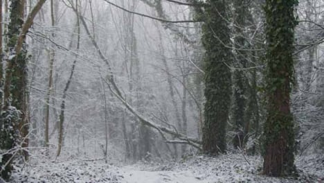 Tracking-Shot-Approaching-Snow-Covered-Tree-Branches-Along-Path-In-Woodland