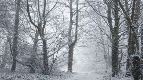 Pedestal-Shot-Rising-Up-Snow-Covered-Trees-In-Woodland