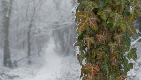 Pull-Focus-Shot-of-Snow-Covered-Footpath-In-Snowy-Woodland