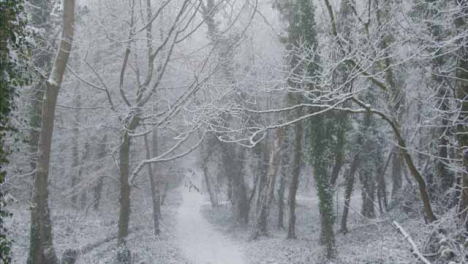 Tracking-Shot-Along-a-Snow-Covered-Footpath-In-a-Snowy-Woodland