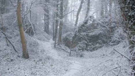 Tracking-Shot-Along-a-Snow-Covered-Footpath-In-a-Snowy-Woodland-Area-