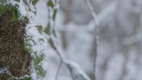 Extreme-Close-Up-Shot-of-Snow-Covered-Leaf-In-Woodland-