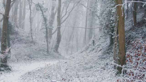 Tracking-Shot-Along-Footpath-In-a-Snowy-Woodland-
