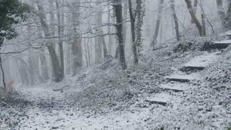 Tracking-Shot-Along-Footpath-In-a-Snowy-Woodland-Looking-at-Trees