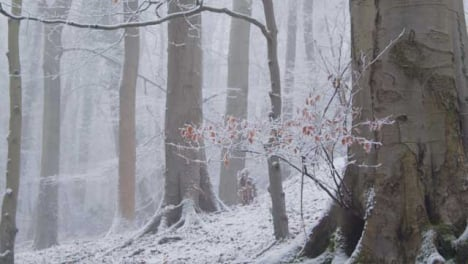 Tilting-Shot-Looking-Up-at-Snow-Covered-Trees-In-Snowy-Woods
