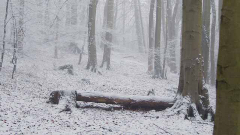 Wide-Shot-of-Snowy-Woodland-