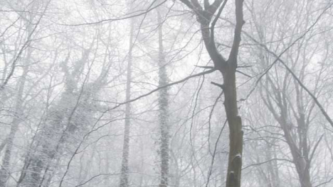 Panning-Shot-Across-Snow-Covered-Trees-In-a-Snowy-Woods