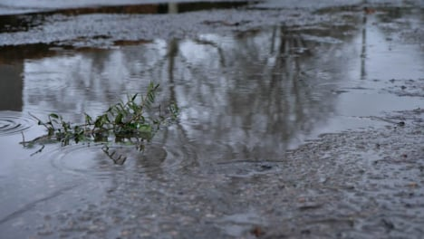 Close-Up-Shot-of-Tiny-Plant-Laying-In-Puddle-In-the-Rain