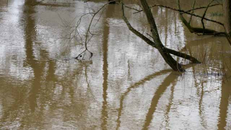 High-Angle-Shot-of-Tree-Submerged-In-Flood-