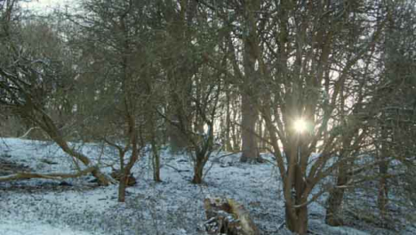 Tracking-Shot-of-Sunlight-Bursting-Through-Snow-Covered-Trees