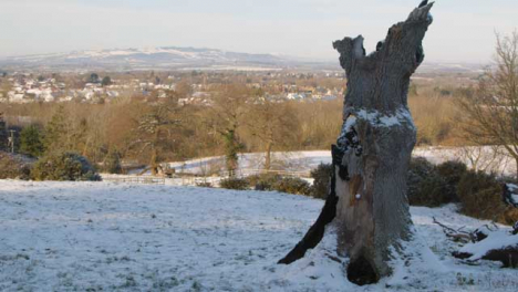 Panning-Shot-of-Dead-Tree-with-Snow-Covered-Countryside-In-Background