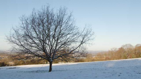 Tracking-Shot-of-Isolated-Tree-In-Snow-Covered-Field-