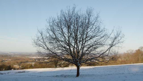 Tracking-Shot-Approaching-an-Isolated-Tree-In-Snow-Covered-Field-
