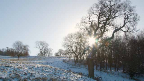 Tracking-Shot-Looking-at-Large-Naked-Tree-In-Snowy-Field-as-Sun-Burst-Trees