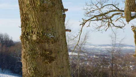 Sliding-Close-Up-of-Tree-Trunk-Against-Snowy-Cotswold-Landscape
