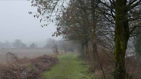 Tracking-Shot-Down-Countryside-Footpath-Next-to-Trees