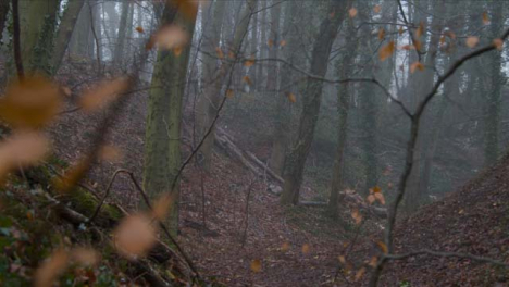Tracking-Shot-Past-Thin-Branches-In-Woodland-Area