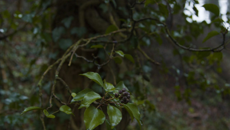 Tracking-Shot-Past-Branches-In-Woodland-Area