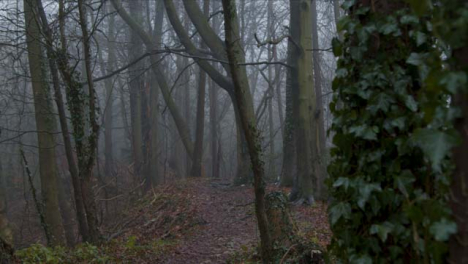 Tracking-Shot-Along-Public-Footpath-In-a-Woodland-Area