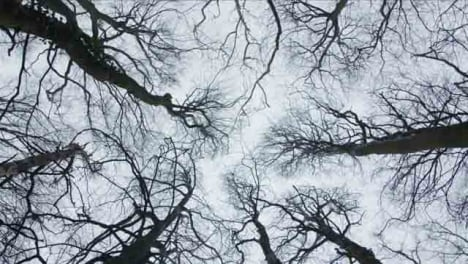 Low-Angle-Rotating-Shot-Looking-Up-at-Treetops-In-Woodland-Area