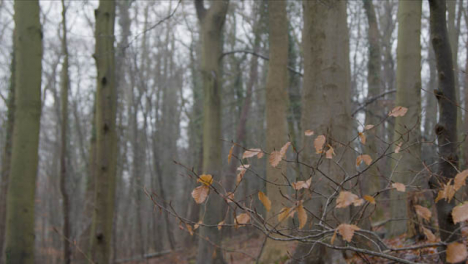 Close-Up-Shot-of-Thin-Branches-In-Woodland-Area
