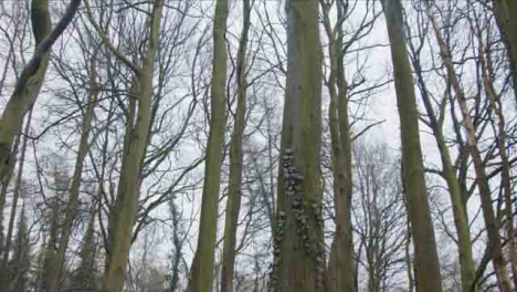 Tracking-Shot-Looking-Up-at-Treetops-In-a-Woodland-Area
