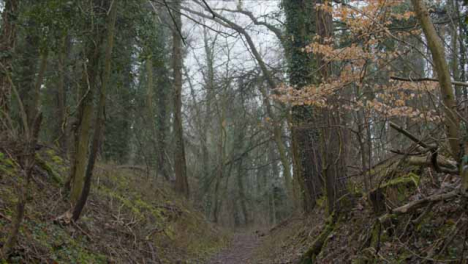 Tracking-Shot-Along-Footpath-In-Woodland-Area