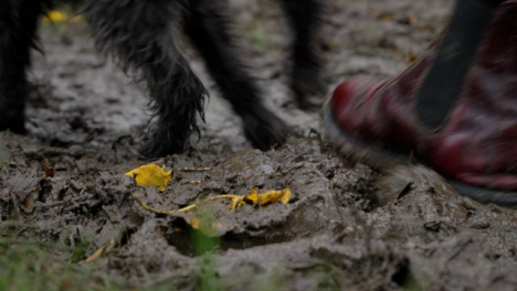 Close-Up-Shot-of-Dog-and-Dog-Walkers-Feet-Walking-Through-Thick-Mud-