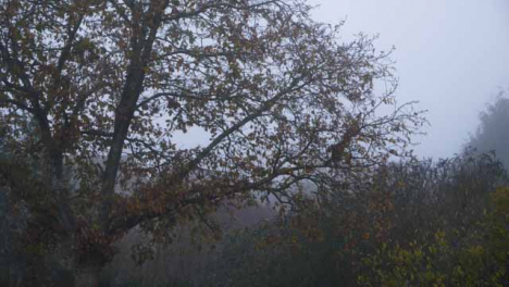Long-Shot-of-Autumn-Leaves-Falling-from-Tree-On-Misty-Morning