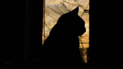 Close-Up-Shot-of-Silhouetted-Cat-Against-Sunset-Skyline-Through-Large-Window