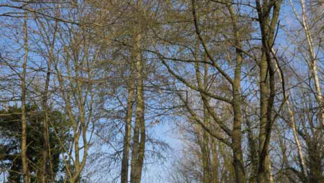 Tracking-Shot-Along-Woodland-Footpath-and-Looking-Up-at-Trees