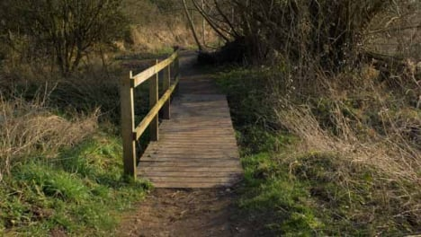 Tracking-Shot-Along-a-Woodland-Footpath-and-Bridge
