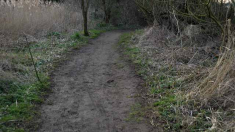 Tracking-Shot-Along-Muddy-Woodland-Footpath