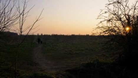Tilting-Shot-of-Dog-Walkers-In-Field-at-Sunset