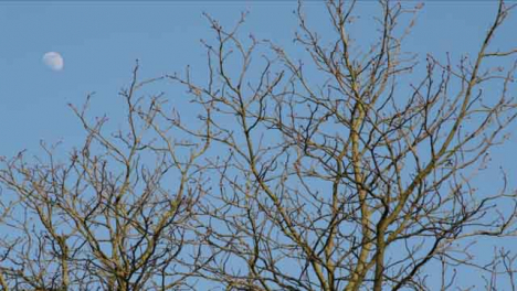 Tracking-Shot-Looking-Up-at-Naked-Tree-Branches-and-Moon