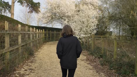 Tracking-Shot-Following-Young-Woman-Approaching-Blossom-Tree-