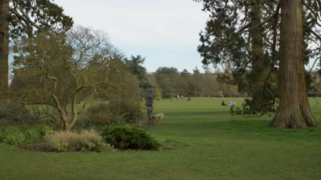 Tracking-Shot-Approaching-People-In-Distance-Enjoying-Afternoon-In-Park