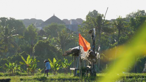 Tracking-Shot-Past-Bush-Revealing-Field-Workers