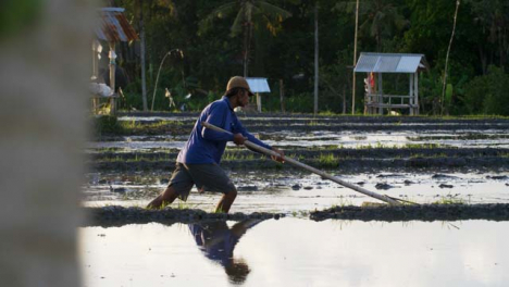 Tracking-Shot-Following-a-Farm-Worker-In-Paddy