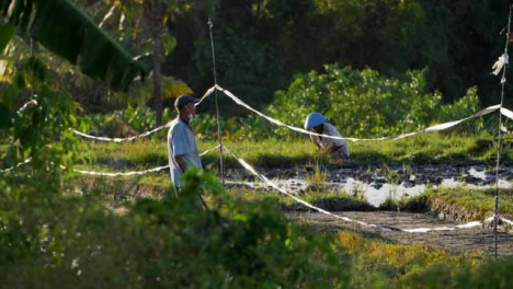 Tracking-Shot-Past-a-Bush-Revealing-Farm-Workers