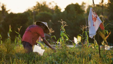 Tracking-Shot-Past-Bush-Revealing-Farm-Worker-In-Field-During-Sunset