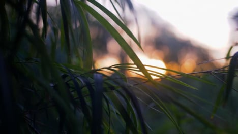 Handheld-Close-Up-of-Leaves-In-Sunset
