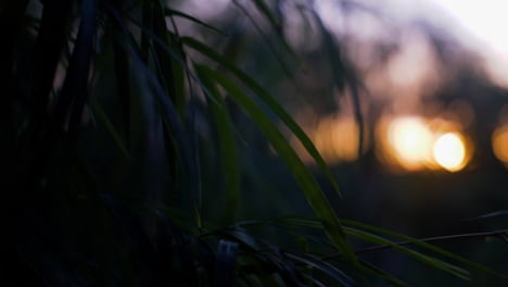 Handheld-Close-Up-of-Leaves-In-a-Sunset
