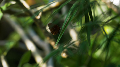 Handheld-Long-Shot-of-Butterfly-On-Leaf